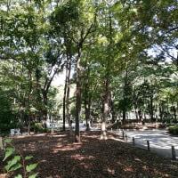 新宿区 西新宿 新宿中央公園