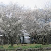 花粉症の季節到来