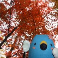 ごずっちょ写真館220 村杉の紅葉