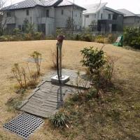 杉並区浜田山:地下水が低下したみたい。今年は雨が少ないからだと思う。#手押しポンプ #井戸ポンプ