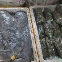 昆明市の魚市場で見たオオサンショウウオ=娃娃魚