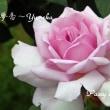 薔薇の園  * 2017 *  Vol.42 * 夢香~Yumeka *