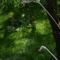 お客さん半袖、マスター長袖にベストの涼しさ境目の午後の森。
