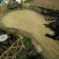 きょうの庭の手入れ(池と芝生)