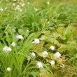 夏の八幡平の花々