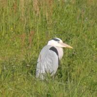 大川の野鳥散策は空振りに…(4月24日)