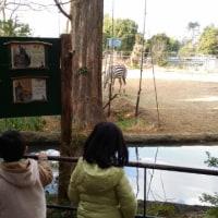 正月に動物園