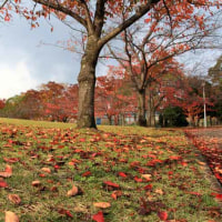 深まる秋 ・ 晩秋の緑地公園(奈良県)