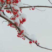 雪の週末。小さなプレゼント