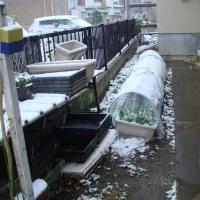 アノ日・緊急雪対策
