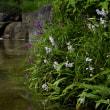 5月7日 須磨離宮 藤が咲いていました。