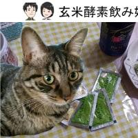 玄米酵素(HI-GENKI)飲み始めました!・玄米酵素ハイ・ゲンキファンサイト参加中