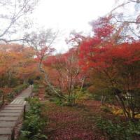 錦繍の京都紅葉めぐり 二日目