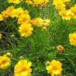 7月に咲く花
