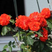 赤いお花・・・☆