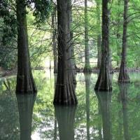 緑の池 Ⅱ