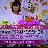 2/13・・・めざましテレビお花プレゼント