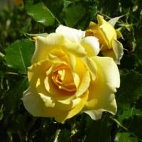壽堂日記28年9月25日「長寿の灸。」