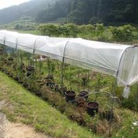 自然菜園スクール/自然菜園見学コース「田んぼの除草と畑の草マルチ」