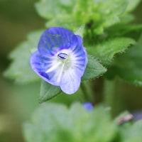 庭の花/その2