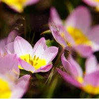 九州からの便り(熊本は復興はまだまだですよと、でも花は嬉しくさせてくれます)!を頂きました。