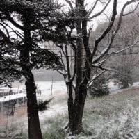 千里ニュータウンも雪景色