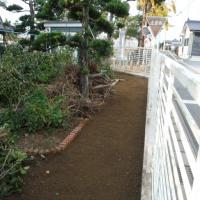 東側庭改造№2(生垣の根っこ撤去)