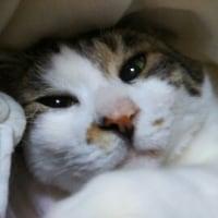 寝起きです