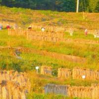 秋の信州・・・上田・・・夕陽に染まる稲倉の棚田