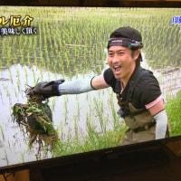 昨日の日テレ「鉄腕ダッシュ」千葉県佐倉市ロケ(印旛沼)に外来種・噛みつきガメが1万6千匹生息