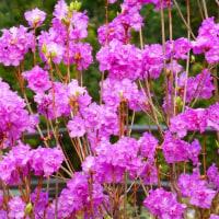 京都府立植物園の春の花(3-その他)