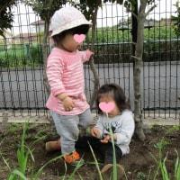 2017年4月27日(木)の【写真館】