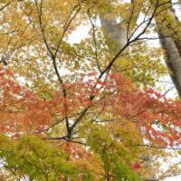 多摩川台公園から多摩川