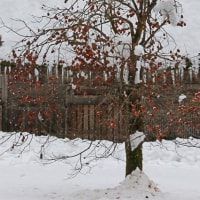 世界遺産・雪降る白川郷 12