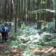 2017.6.3 笠形山