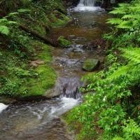 深緑・小雨・渓流~吉野の山の中へ