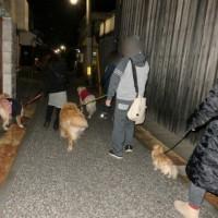 4ワンズで夜の散歩