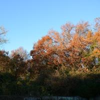 12月10日、午前7時過ぎの空模様