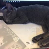 今日も安定の特等席~監視員猫