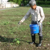 '17.05.28 パパイヤに肥料を撒く