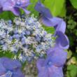 梅雨の晴れ間の花
