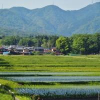 新緑のメタセコイア並木、マキノ高原へのアプローチ・・・奥琵琶湖・滋賀県高島市マキノ町