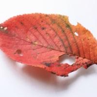 今朝の秋・黄落