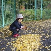 銀杏の葉のじゅうたん。。。