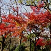 千里ニュータウンの紅葉を探しました
