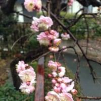 2月23日(木)のつぶやき