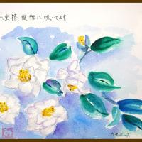 白い八重椿、優雅に咲いています