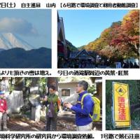 2016.11.12(土)自主巡回/山内【6号路での森林環境調査と利用者動態調査】