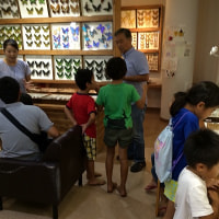 孫達と石垣市のバンナ公園・世界の昆虫館に行ってきました