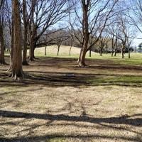 初春の兆しを思わせた武蔵野公園です その3